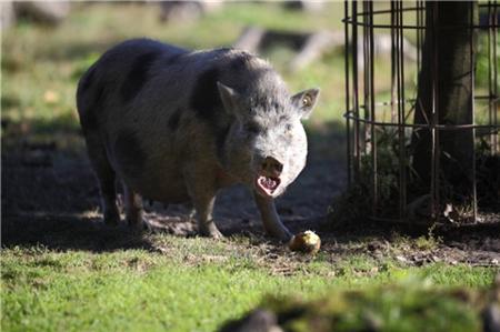 猪价完成季节性反弹的第一阶段,7-8月份将向12元冲击!