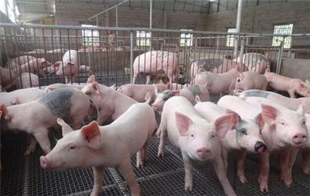 2018年07月02日(30至40公斤)仔猪价格行情走势