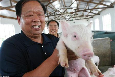 猪价真正上涨!必须从仔猪亏损开始!