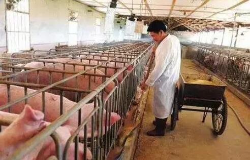 行情低迷,家庭猪场决不能被动成为牺牲品!