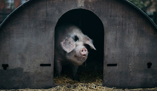 听说猪价逆势上涨得靠他们,靠谱吗?
