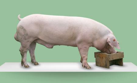"""七月带着热情来了,也是下半年新的开始,猪价行情也迎来新气象,今日(2018-07-04)全国外三元均价为5.75元/斤,全国区域内华中地区行情较好,上海、山东、福建地区破""""6"""""""