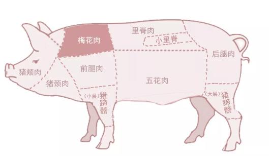 """中国送阿富汗一头猪成其""""国宝"""",比熊猫还珍贵?"""