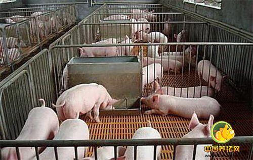 养猪场管理必须注意的五个问题!