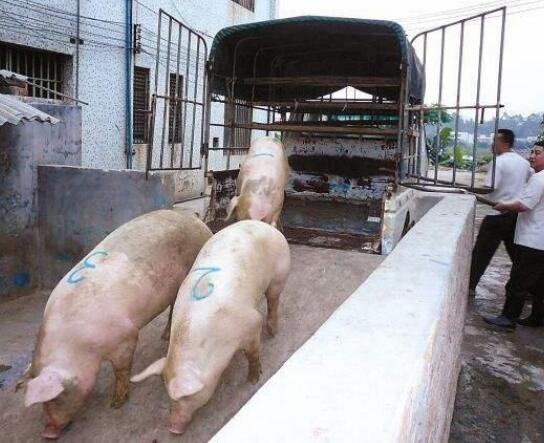猪价涨跌的规律原来是这样的,值得每个养猪人看看!