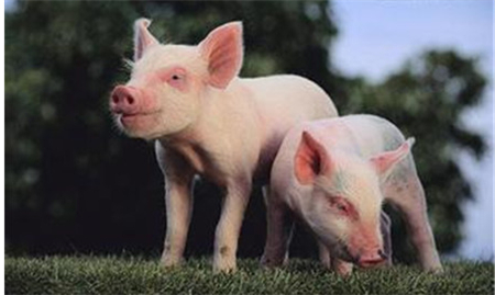 2018年07月09日(10至14公斤)仔猪价格行情走势