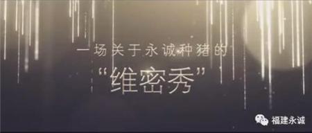 永城集团种猪选美大赛!