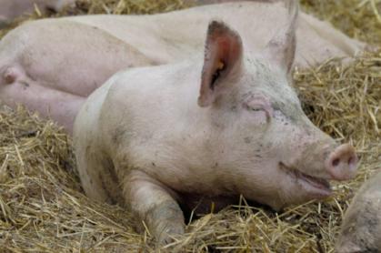 9月20日,黑龙江省重大动物疫病防治指挥部紧急发电,称在送检的喷雾干燥猪血浆蛋白粉的其中一个批次,监测结果为非洲猪瘟病毒核酸阳性。