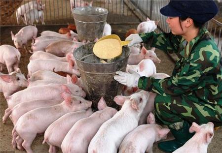 养猪真的有前途吗?2018年养猪前景分析,这些你了解过吗?