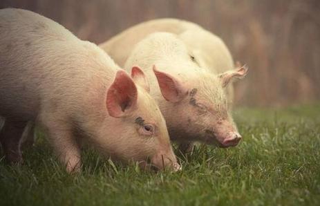0月17日12时,农业农村部接到中国动物疫病预防控制中心报告,经中国动物卫生与流行病学中心(国家外来动物疫病研究中心)确诊,山西省大同市左云县一养殖户排查出非洲猪瘟疫情。该养殖户存栏生猪15头,发病7头,死亡4头。