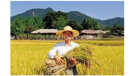 瞄准8亿农民获利,一揽子增收新政将实施