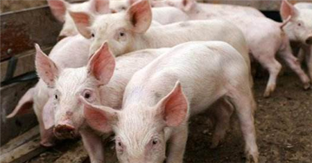 2019年饲料企业销量的大幅下滑?该如何应对?
