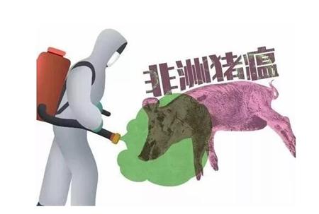 农业农村部:不排除继续出现非洲猪瘟新发疫情可能