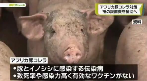 猪瘟疫情蔓延之际,日本继续出口猪肉至港澳地区!