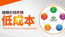 引领养猪  扬翔低成本