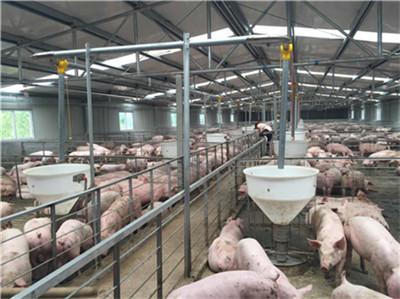 强烈对比!今日生猪价格、批发市场猪肉价格、终端猪白条肉价格!