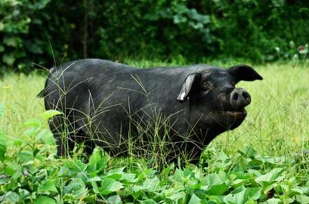 瑶族大学生返乡养猪,欲带领贫困家乡脱贫致富