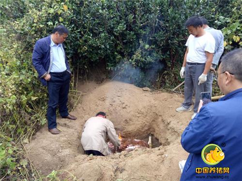 焚烧后填埋,岳西县农业局公开销毁查处的私宰猪肉