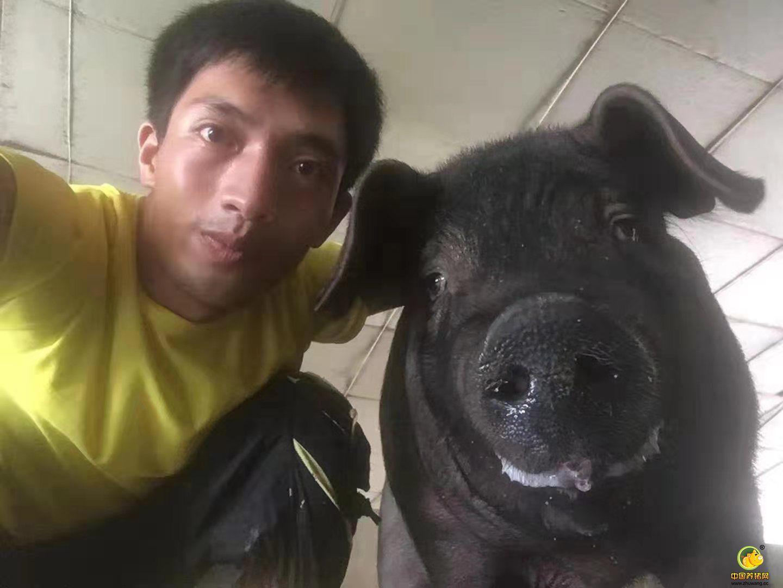 自家养的大肥猪!这才是真正的爱猪人士啊!