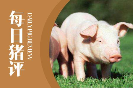 """10月15日猪评:生猪变""""金猪"""",谁能为这势不可挡的高昂猪价负责?"""