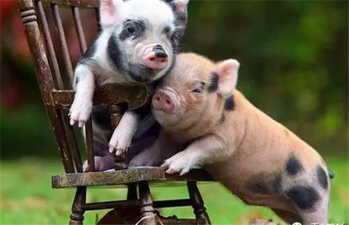 拐点将至?9月生猪、母猪存栏降幅明显趋缓,降幅缩小超6个点!