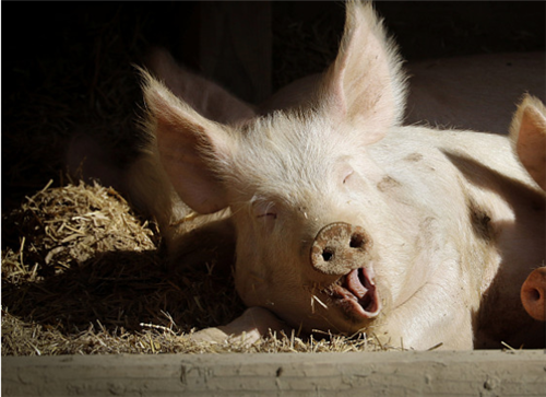 """猪价影响9月CPI破""""3""""央行提醒防止通胀预期扩散"""