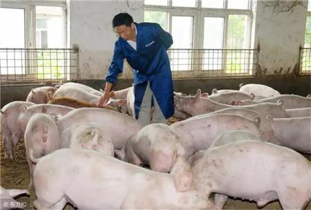 """韩国步中国""""老路""""?疫情前期生猪价格不涨反跌?"""