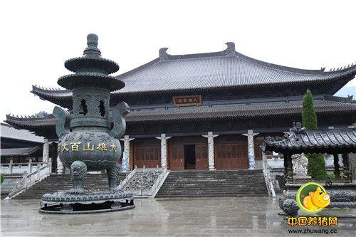 百丈论坛秋季分享会——寺庙风景,养鸽致富!