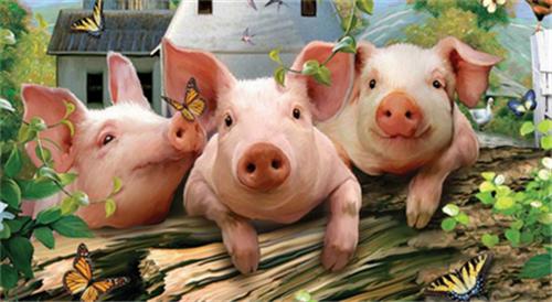 20元猪价要出现,局部地区却跳水,养殖户怎么选?