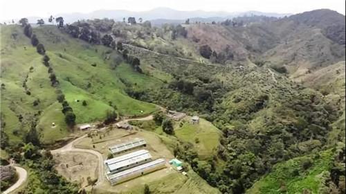 哥伦比亚:两周批生产的猪场见闻
