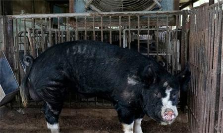 农业农村部印发《2019年全国秋季重大动物疫病防控工作检查实施方案》