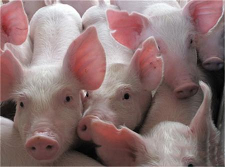 专家发言:规模养殖场那些不得不说的问题!(1)