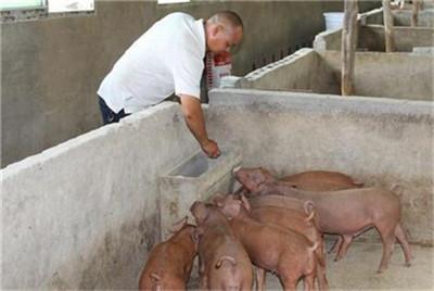母猪产后不让仔猪吃奶的原因分析,及解决方法!