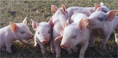 天津:加大生猪生产扶持力度,不需办建设用地审批