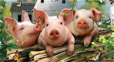 养猪要想赚钱,这8种母猪一定要淘汰!不能优柔寡断