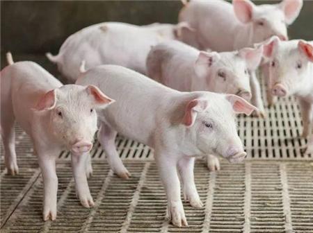 局地震荡继续,生猪出栏均价跌至36元/公斤以下