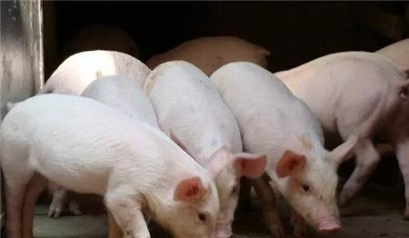 曹德旺:猪肉涨价是合理的,不涨价才是不合理的,