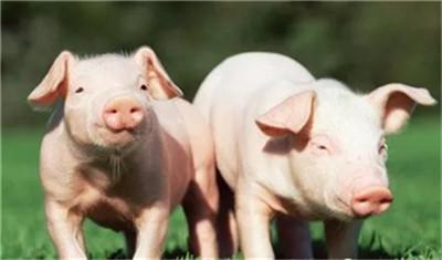 一百多斤猪拉肚子吃什么药好得快,能提前预防吗?