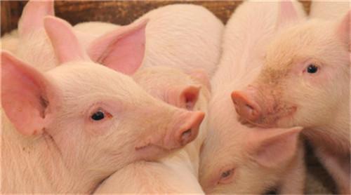 临床兽医误诊误治原因有哪些?怎么应对?(2)