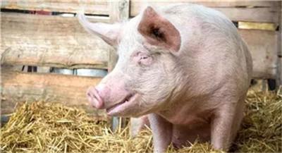 """国家为猪肉""""操碎心"""",猪肉降价预计在……"""