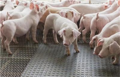 哪些兽药在使用过程中需要小心慎重?