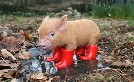 中国养猪网每日猪价简评,国内猪价有望迎来全面上涨!