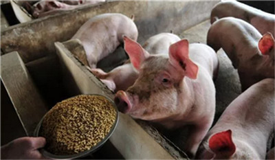 促生猪生产,各地相继出台这些政策!