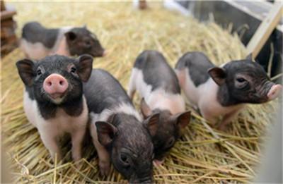 猪价拐点?养殖龙头逐月增长趋势或告终!