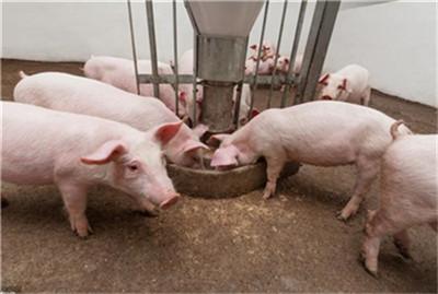 猪价持续走跌,待挤掉水分后将再度走强!