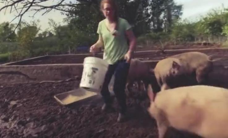 """为什么美国人很少吃猪肉,反而是""""养猪第一大国""""呢?"""