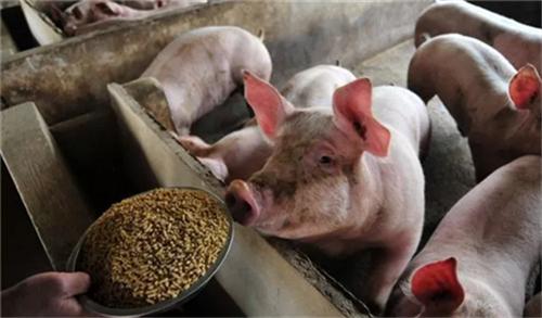 产前产后母猪容易被忽视的几个问题