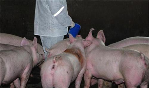 猪友们,这些基础的兽药你会用吗?