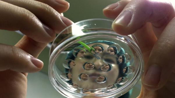 日本要在猪体内培植人类脏器:二者内脏大小最相近!