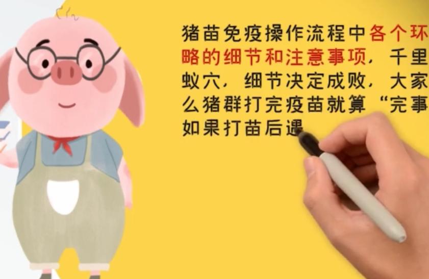 养猪技术:猪苗的免疫及操作流程第三节